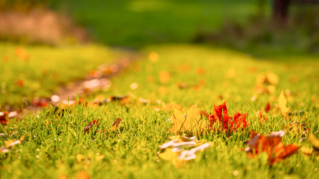 red and yellow leaves on the ground in autumn