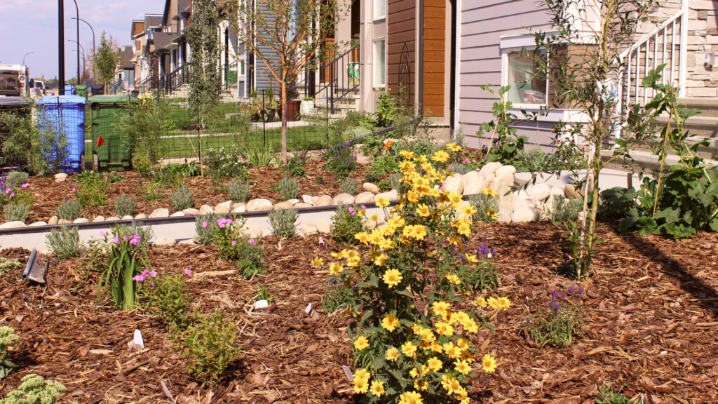 landscaped yard with mulch in wolf willow